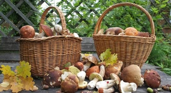Особенности подготовки к сушке грибов в духовке